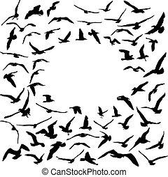 Seagulls black silhouette on white background. Card design. Vector