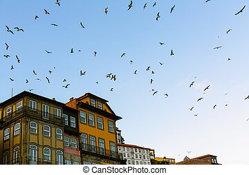 Seagulls circling over the old European city.
