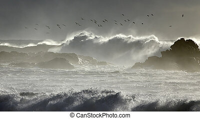 Seagulls dance over stormy sea