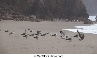 Seagulls fighting in the sand while raining in slow-mo -...