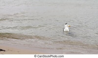 Seagulls floating on water surface of sea nature video. Gull birds swims on waves looking for food