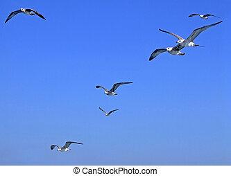 Flock of seagulls flying