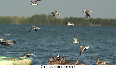 seagulls fly around a fishing boat in ria largartos, mexico