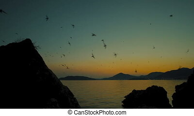 Seagulls fly over sea on summer evening when sun down. Birds...