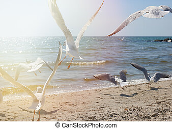 seagulls fly over the sandy coast of the Black Sea on a summer day