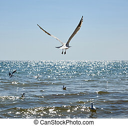 seagulls fly over the sandy coast of the Black Sea on a summer day, Ukraine