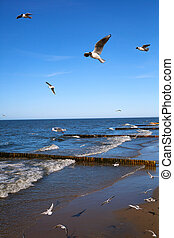Seagulls fly over the sea on background of blue sky