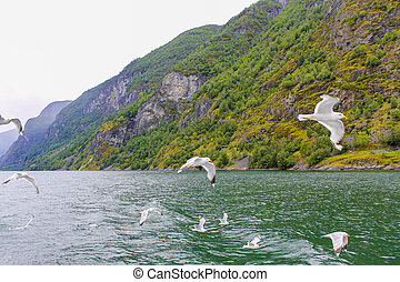 Seagulls fly through the beautiful mountain fjord landscape in Norway.