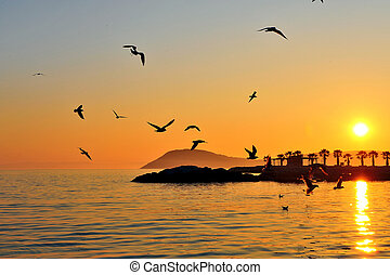 Seagulls flying above the sea on sunset
