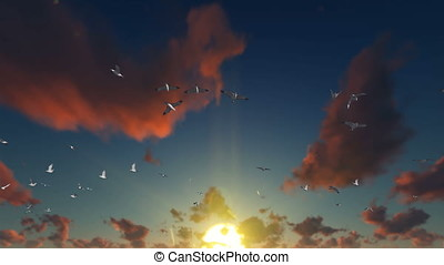 Seagulls flying against beautiful sunset, 4K