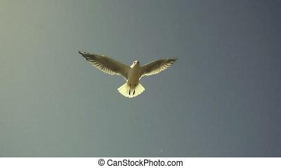 Seagulls flying against the blue sky. Flock of birds flies ...