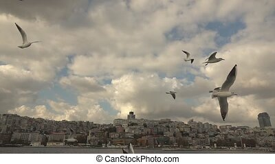 Seagulls Flying in a sky - beautiful view of the seagulls...