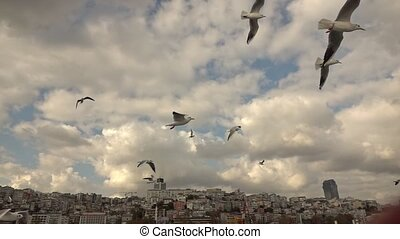 Seagulls Flying in a sky - a flock of seagulls flying in the...