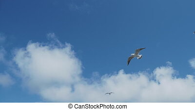 Seagulls flying in blue sky. Good weather with strong wind.