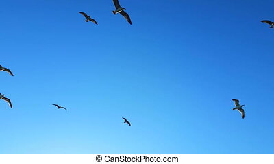 Seagulls Flying In Clear Blue Sky
