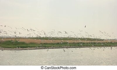 Seagulls flying in slow motion. Gulls, water and sky. Bird...