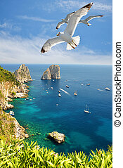 Seagulls flying near the Faraglioni cliffs on island Capri.