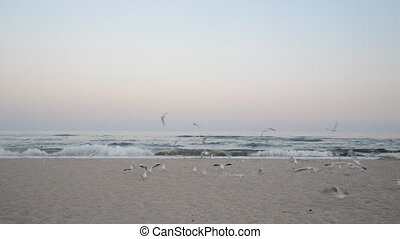 Seagulls flying on a beach at the sunset