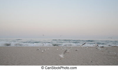Seagulls flying on a beach