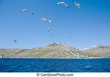 seagulls flying over a blue sky