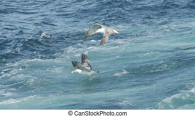 Seagulls flying over sea in slow motion