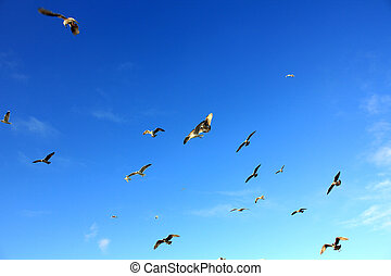 seagulls flying over the blue sky