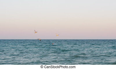 Seagulls flying over the sea at sunset - Slow motion shot of...