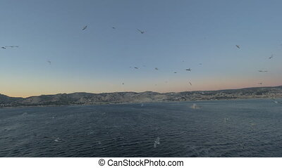 Seagulls following the cruise ship - View from the deck of...