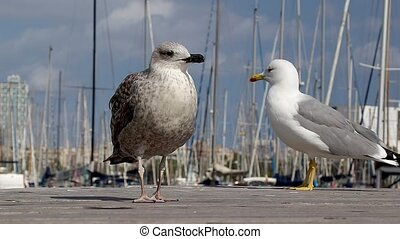 Seagulls gracefully poses for a photo