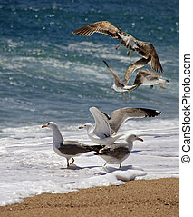 Seagulls - Image of a seagulls on the sand at a beach