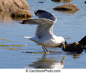 seagulls in a colony of birds