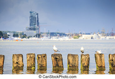 Seagulls in Gdynia, The Baltic Sea