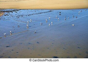 Seagulls in the beach