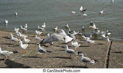 seagulls in the sea coast