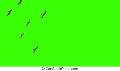 Seagulls in the sky on chroma key