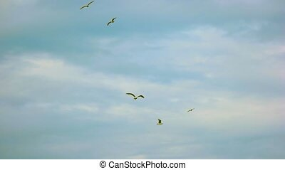 Seagulls in the sky. Birds flying in slow motion. Why do...