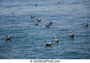 Seagulls in water of the sea