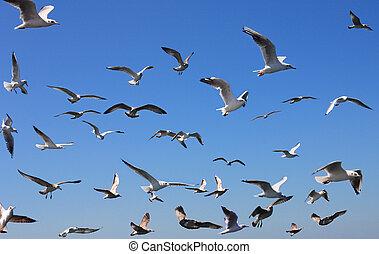 seagulls, niebo