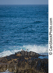 Seagulls on a rock in the beat of waves