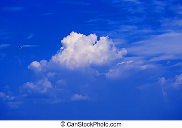 seagulls on background of clear blue sky with white clouds