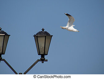 seagulls on lantern