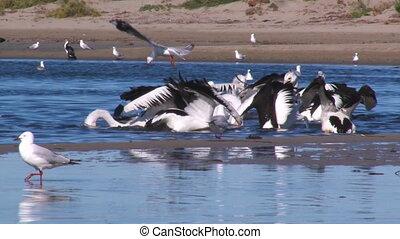 Seagulls on ocean shot - A medium shot of seagulls on ocean