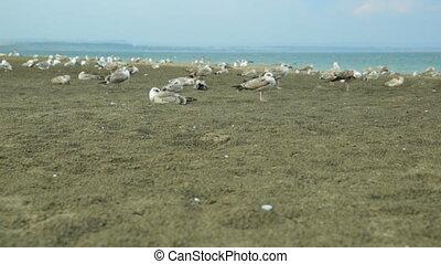 Seagulls on sand beach