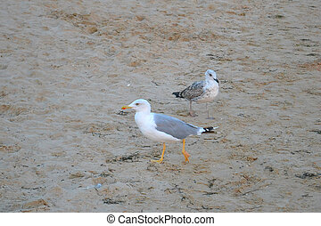seagulls on sand on a beach