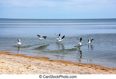 Seagulls on seacoast - Some seagulls flying up from sandy...