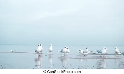 Seagulls on the Baltic sea in winter
