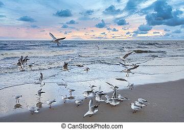 Seagulls on the beach at sunset