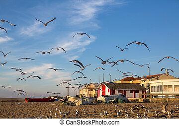 Seagulls on the beach in the fishing village, Atlantic ocean.