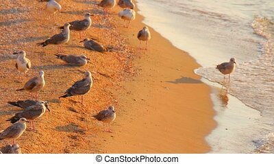 Seagulls on the beach tele ens shot - Seagulls on the beach...