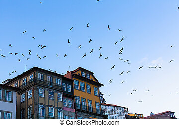 Seagulls on the bly sky and houses, Porto - Portugal.
